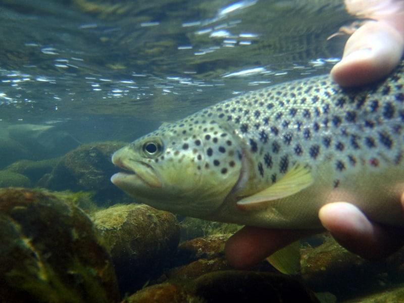 Pêche au toc en plein été